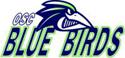 Vellmar Blue Birds